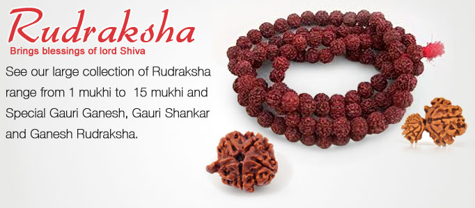 Rudraksha, blessing of lord shiva